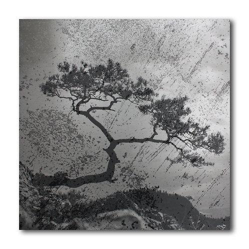 ART n° 224