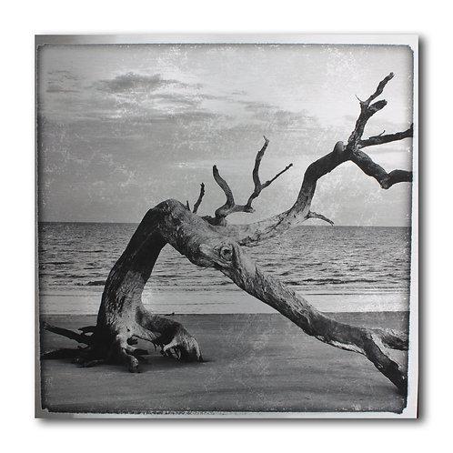 ART n° 225