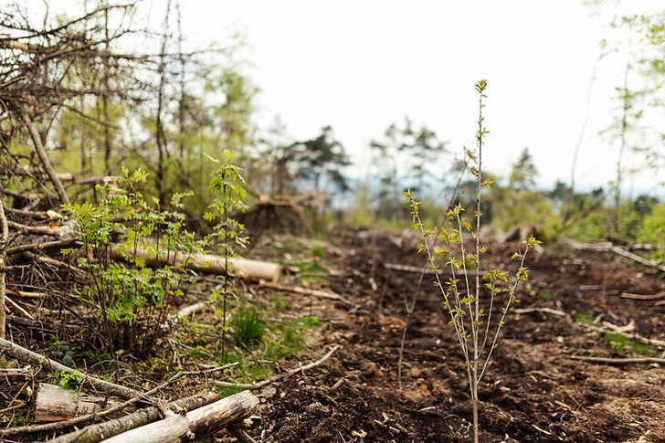 climatebloom-06-mai_15.JPG