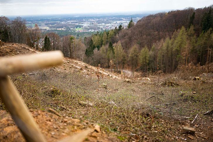 climatebloom-eiserner-anton-fernsehturm_