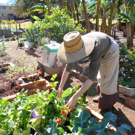 Novitiate Garden 2.JPG