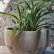 Pot en grès pour les plantes, 14cm de diam 10cm de Hauteur
