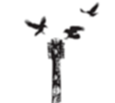 birds on guitar.PNG