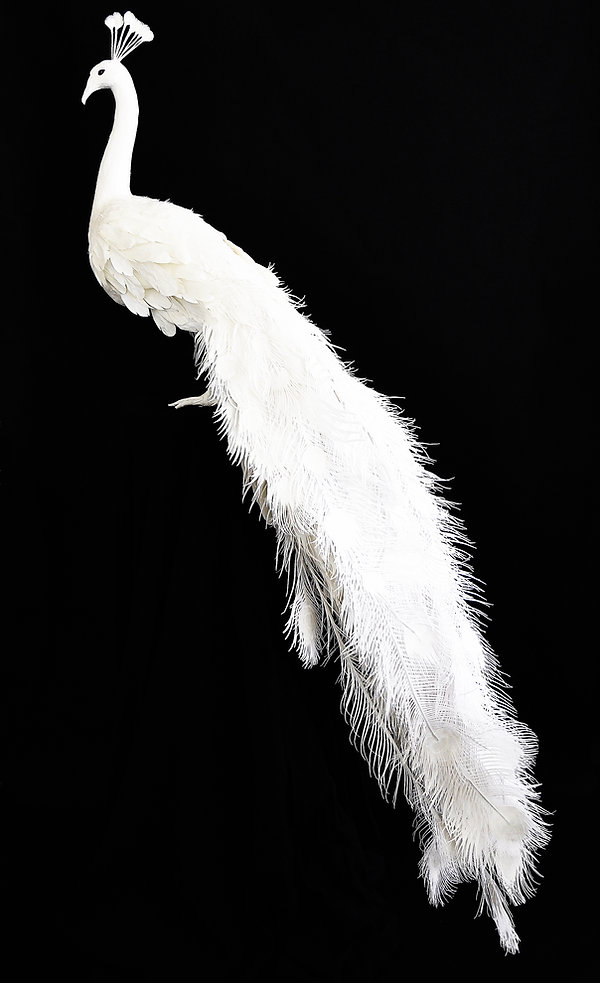 Paon, Géraldine Gonzalez, Chanel, cristal, crystal