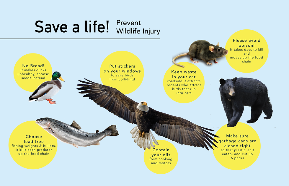 wildlifeprevention.png