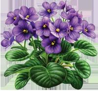 violet for logo 200px.png