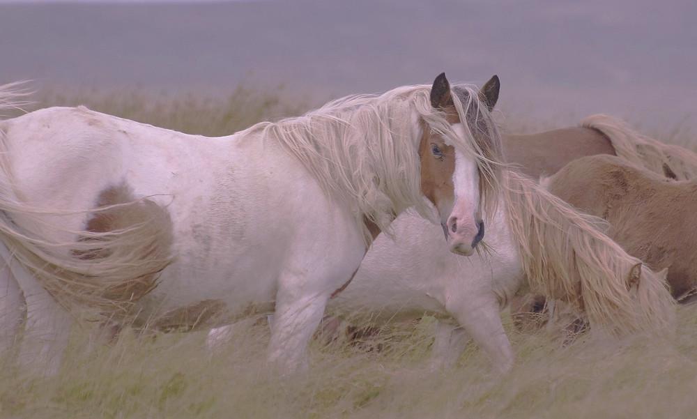 horses, image by Daron Herbert, on Pixabay