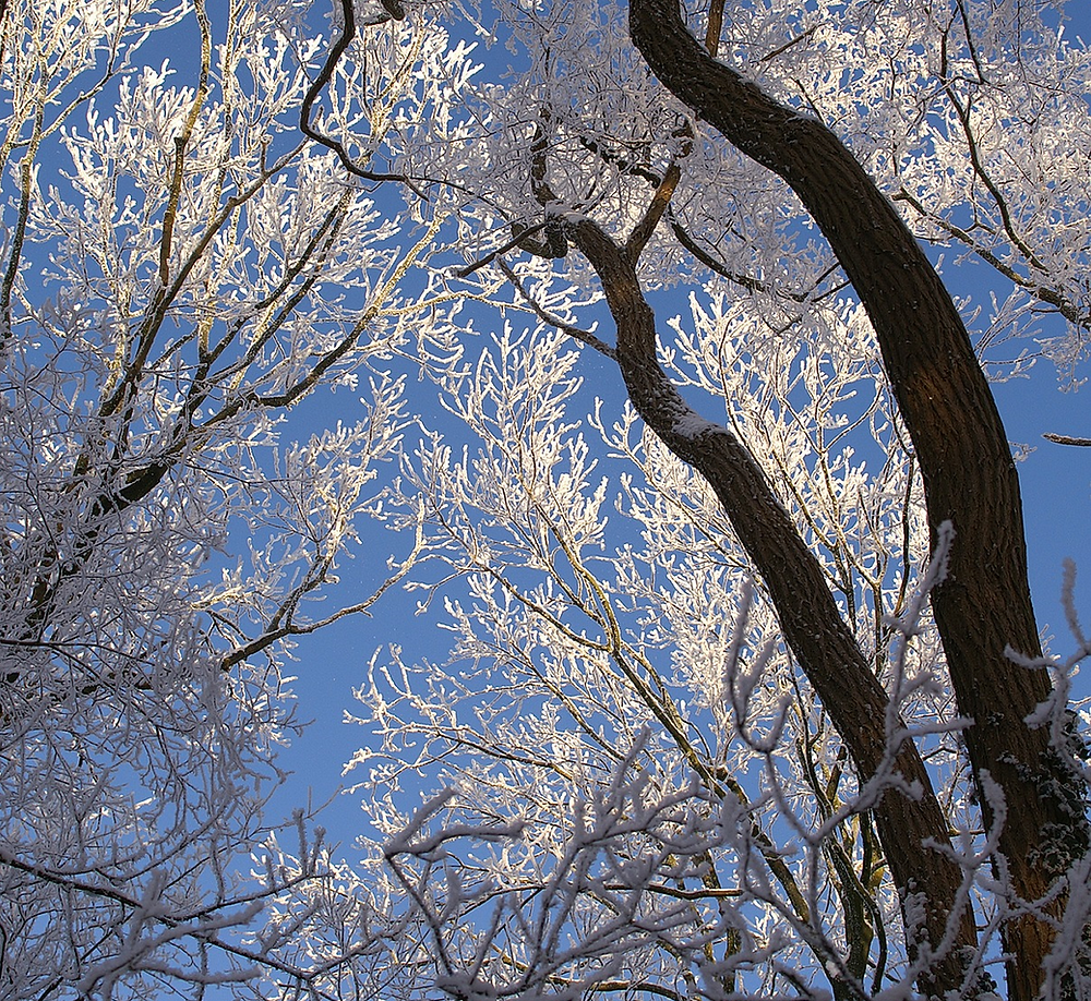 trees in winter, image by Erik Tanghe, on Pixabay