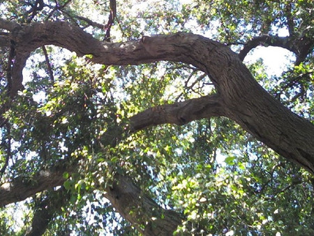Tuesday Tips: Branching Out