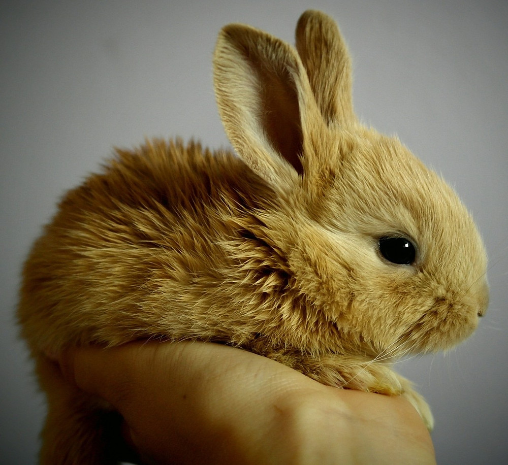small bunny, image by Simona Robová, on Pixabay