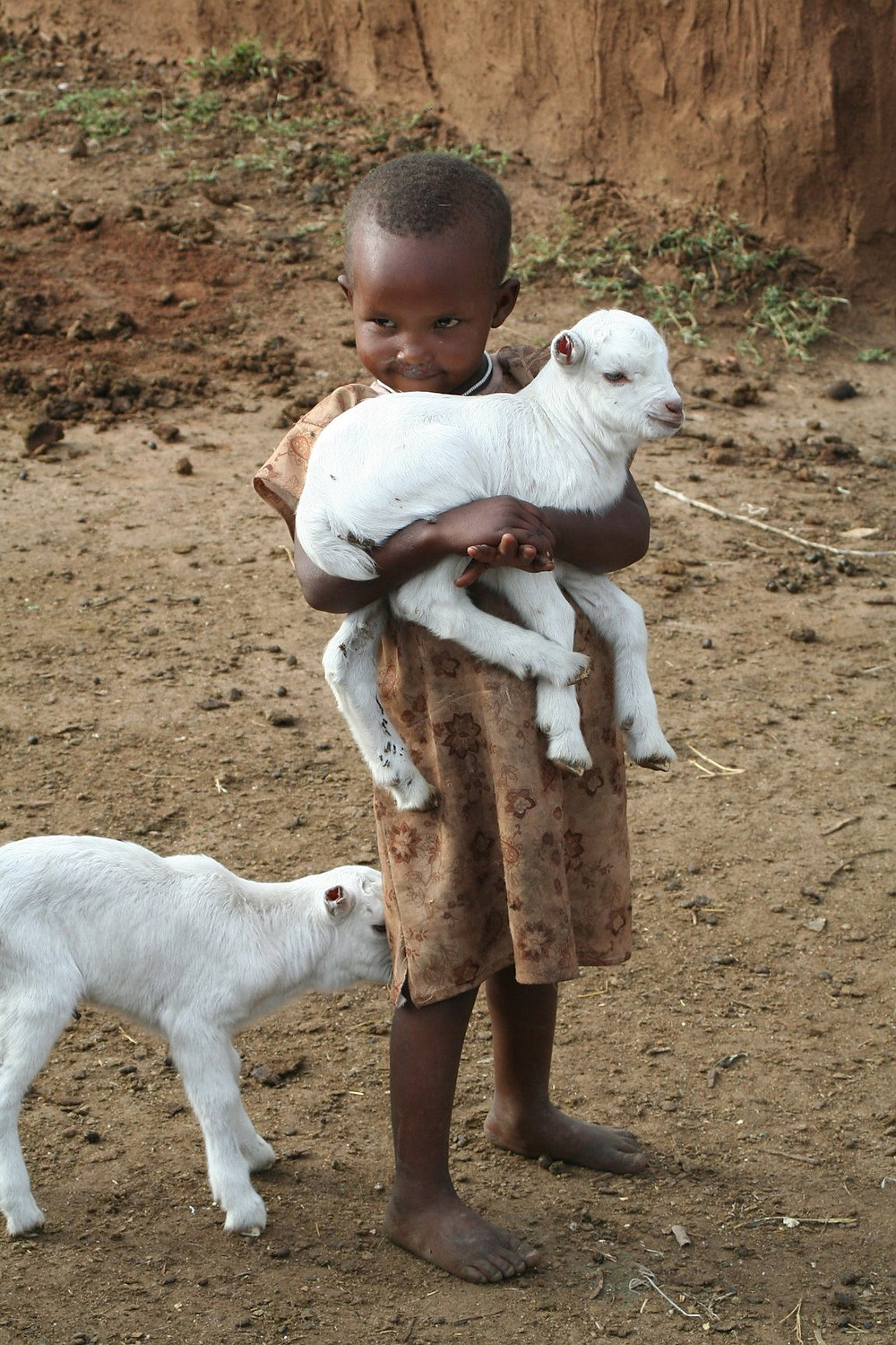 child in Kenya holding a lamb, image by yasmin00, on Pixabay