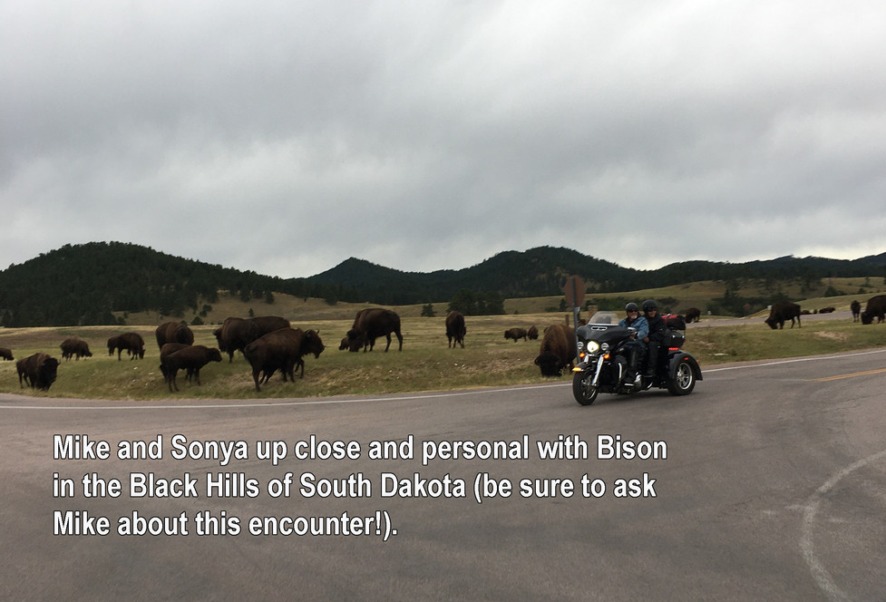 SD and Bison.jpg