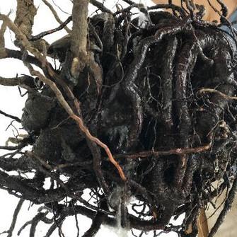 Un albero vivo per uno morto (II atto) Cinzia Colombo