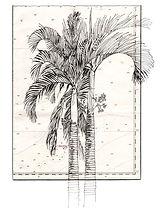 Palmier accueil.jpg