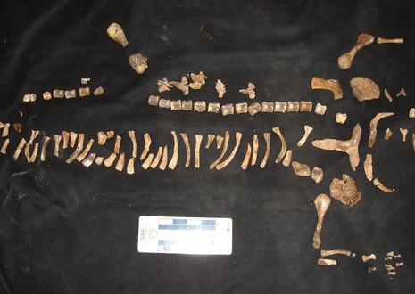 champsosaur-original-fossil.jpg