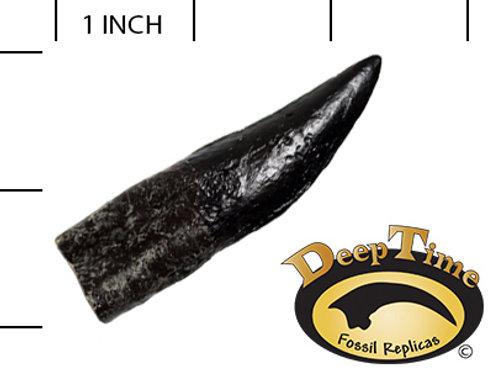 Dilophosaurus Tooth