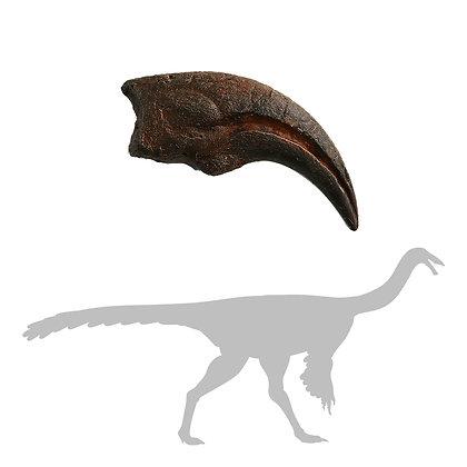 Struthiomimus sp Digit 1 Manus Claw