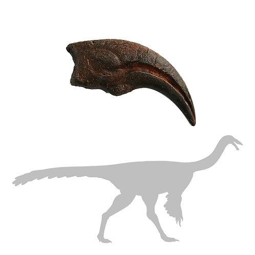 Struthiomimus sp Digit 1 Manus Claw | Replica Fossil