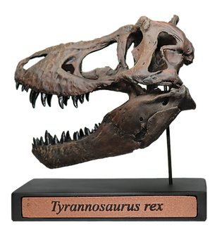 Tyrannosaurus rex Scale Skull Replica