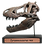 Thumbnail: Tyrannosaurus rex Scale Skull Replica