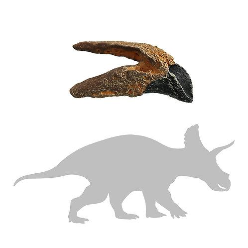 Triceratops horridus Tooth   Replica Fossil