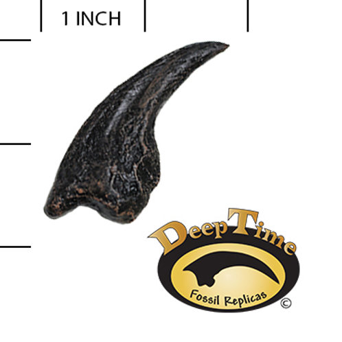 Troodon sp. Foot Claw