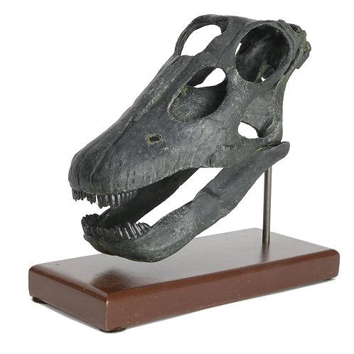 Apatosaurus Sculpted Skull