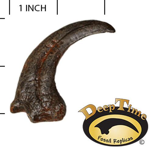 Dromaeosaur Hand Claw