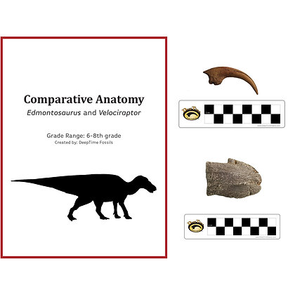 Lesson Plan Claw Pack: Comparative Anatomy