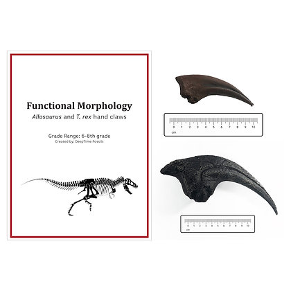 Lesson Plan Claw Pack: Functional Morphology