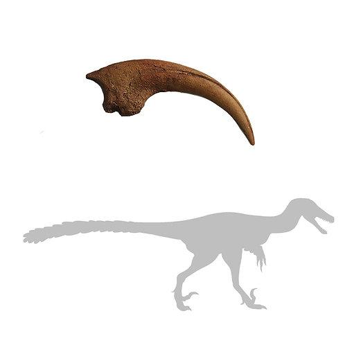 Velociraptor Killing Claw - Single Claw | Replica Fossil