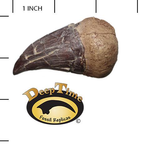 Tylosaurus proriger Tooth