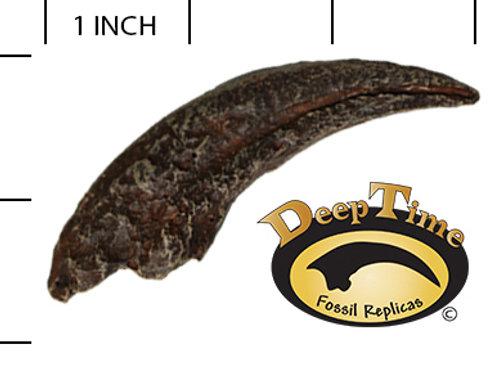 N. African Raptor Claw
