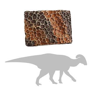 Hadrosaur Skin Impression   Replica Fossil