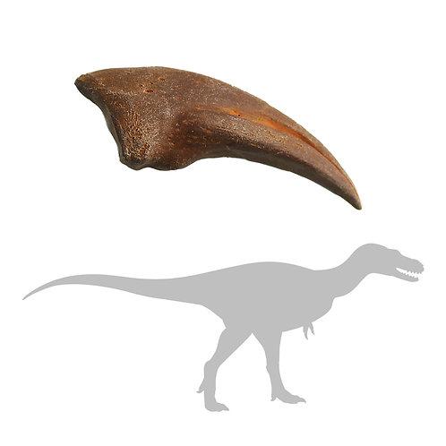 Alioramus Foot Claw   Replica Fossil