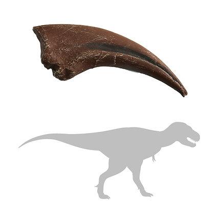 Tyrannosaurus rex Hand Claw