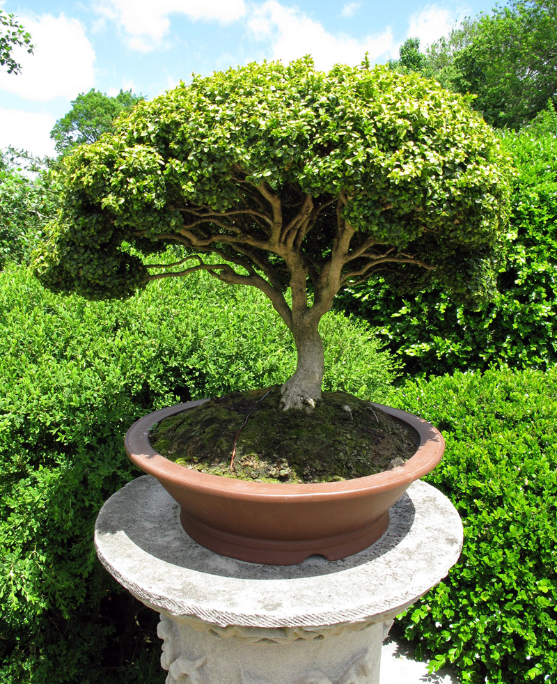 Bonsai Gartentraum