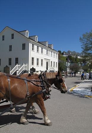 Market Street Horses