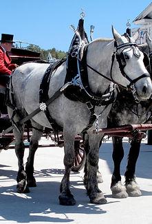 Carriage Horse Team