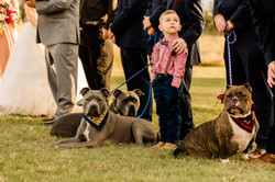 Ring Bearer and pups