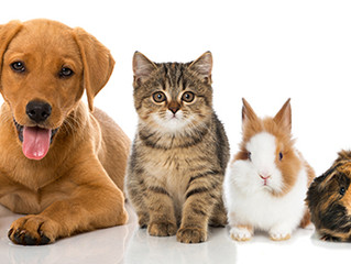 5 Ways Pets Are Good for You