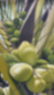 Tavulomo Coconuts