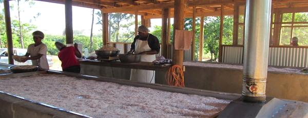 Tavulomo Coconut Drying Tables