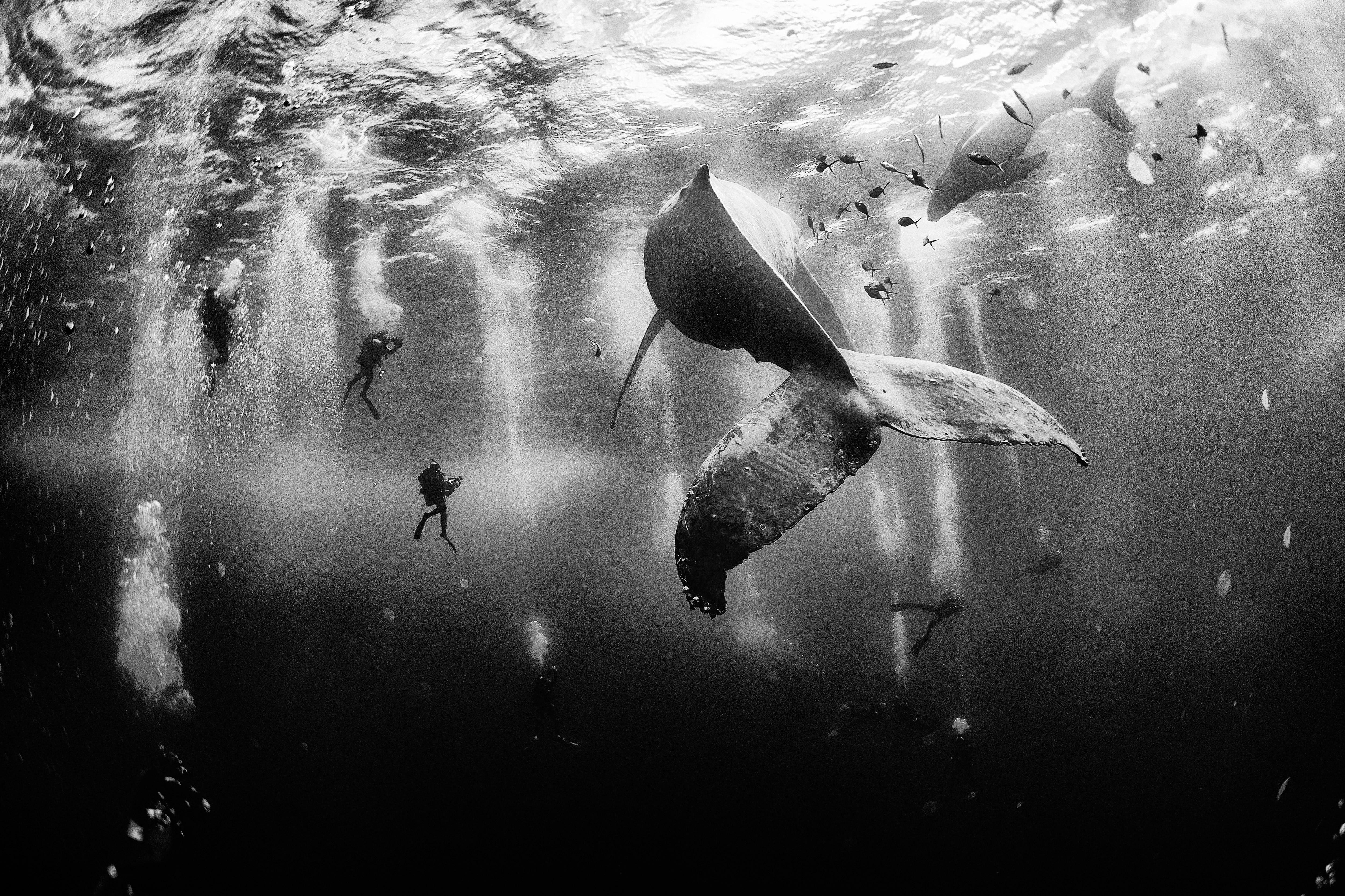whale-diving-dolphins-anuar-patjane