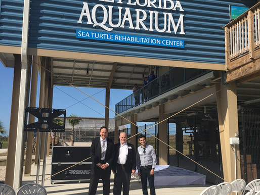 Florida Aquarium Opens Sea Turtle Care Center at Apollo Beach