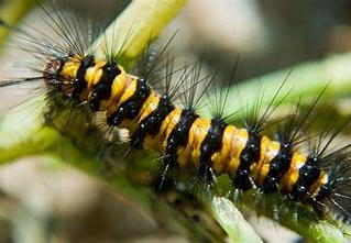 Dance With a Caterpillar