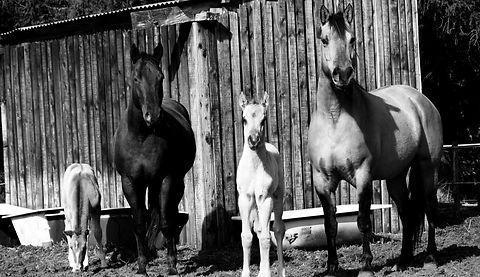 cheval%206_edited.jpg