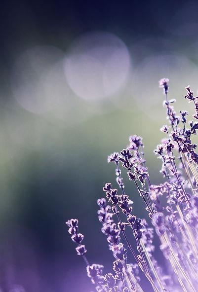 1 Lavender - Portrait Crop.jpg