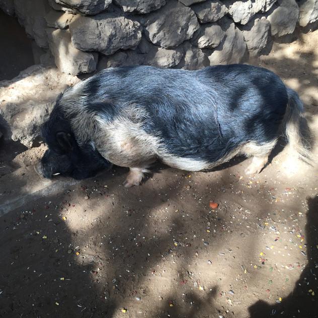 Marbella Zoo19