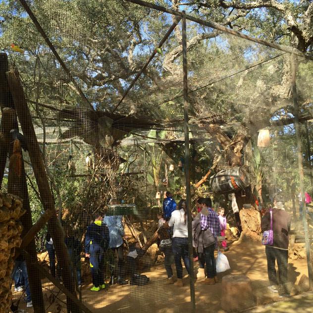 Marbella Zoo9